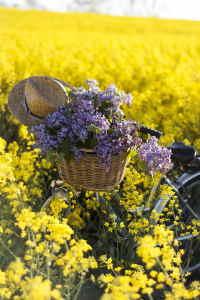 cestas de flores par cumpleaños, cestas de flores para regalar el día de la madre, cestas de flores para nacimiento, flores a domicilio baratas