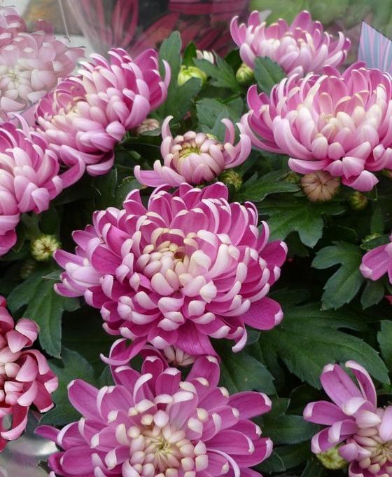 Floristería flores