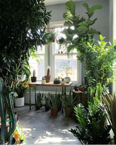 Cesta Plantas México, Comprar Flores Online, Envíos Florales Urgentes, Cesta de Plantas para Regalar, Plantas de Decoración