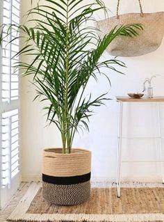 Planta Anthurium, Planta de Interior, Regalar una Planta, Floristería Online, Flores a Domicilio, Floristería Olga